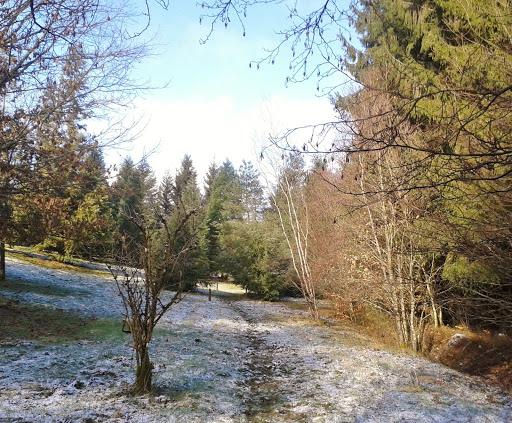 Aboretum de Corbé en plein hiver