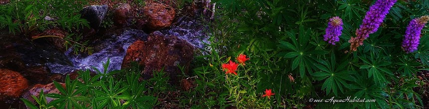 Photo: Most people can feel when something looks natural, but cannot express the details of what makes it so.  We dig into the fine details and are keenly aware of the elements most people feel.    Red indian paintbrush and lupines together are always the star of wild waters.  But this wild water runs alongside a home.
