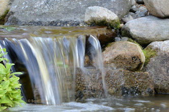 Photo: The lower of two small falls in our backyard pond / water garden. #flowingwaterfriday