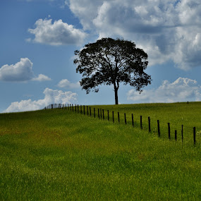 Avaí SP Brazil  by Marcello Toldi - Landscapes Prairies, Meadows & Fields
