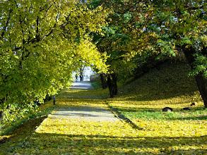 Photo: jesienna aleja