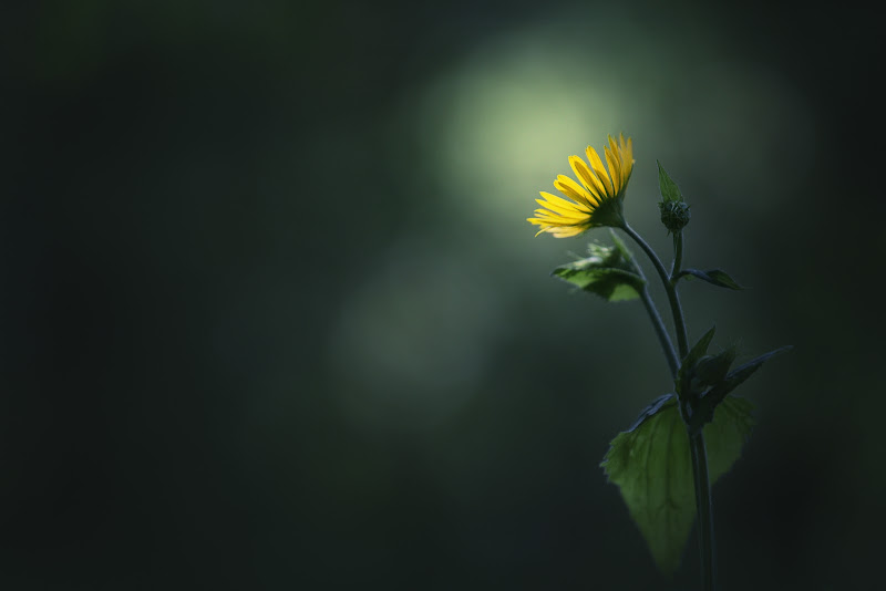 Sole di primavera di Laura Benvenuti