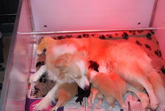 Photo: 28.05.2011 Kenzo   bij zijn mama  2 weken