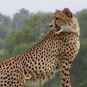 Kruger Lowveld App