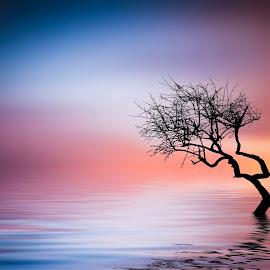 Tree at lake by Bess Hamiti - Digital Art Places ( reflection, sky, tree, sunset, cloud, lake, landscape )