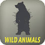 Wild Animals APK icon