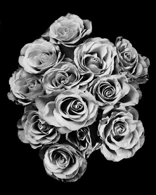 Rose di wam1975