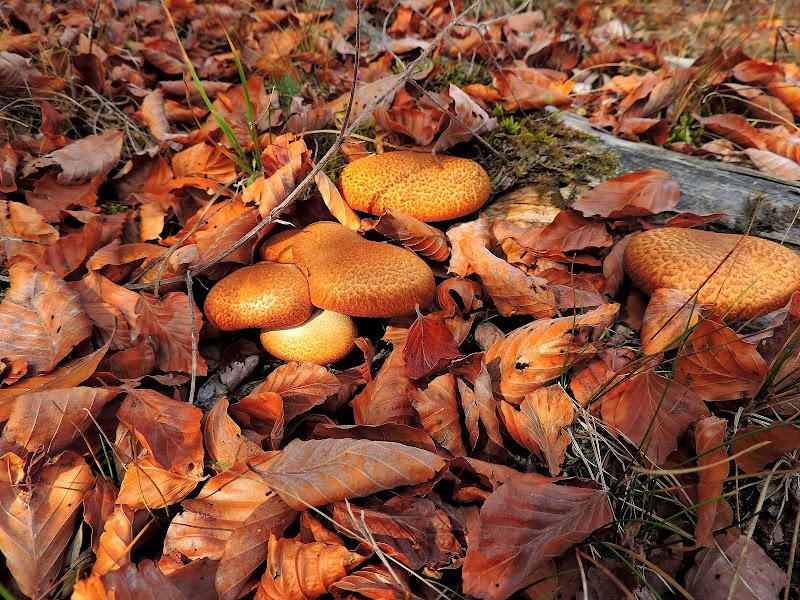 autunno la stagione dei funghi di renzo brazzolotto