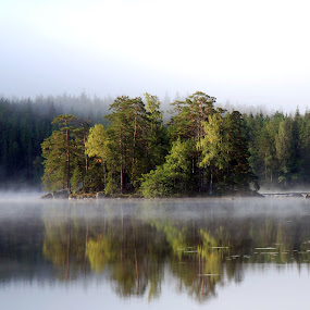 Misty day by Bente Agerup - Nature Up Close Trees & Bushes ( mis, lakes, islands, reflections, trees )