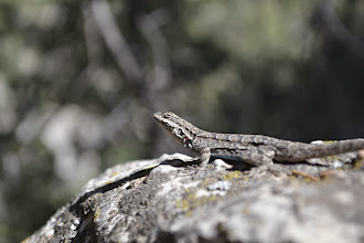 Photo: Pretty Lizard