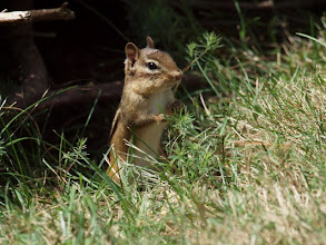 """Photo: """"Hey cat!"""" she called out, """"Tell Squeak to come out here!"""""""