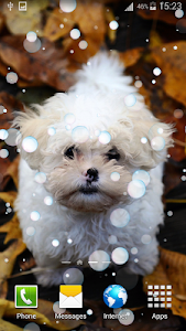 Puppy Live Wallpaper 2 screenshot 1