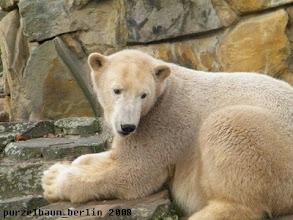 Photo: Knut macht es sich bequem ;-)
