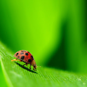 Hiiii there... by Aris Setiarso - Animals Insects & Spiders