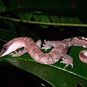 Malaysian Cat Gecko