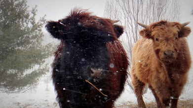 Photo: Youngins Silver & Mocha enjoying some windy, snowy cold...