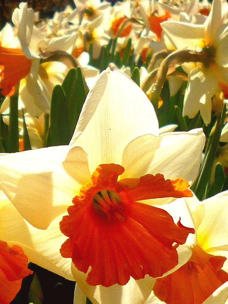 Sboccia la primavera di fantamas