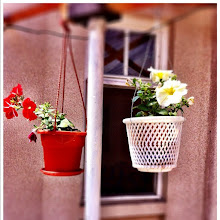 Photo: House flowers #intercer #flowers - via Instagram, http://instagr.am/p/LaHUN8Jfku/