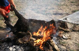 Photo: 03340 ナムジ家/ヤギ石焼料理準備/ボードック/首から下の皮を筒状に剥いだ中に解体した肉と焼石を詰めもどして、外側から火で焼く