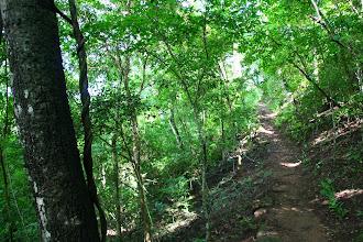 Photo: bajando por el sendero hacia la lagunita, P.N. Calilegua
