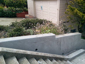 Photo: Area of Hidden Garden Steps site (16th Avenue, between Kirkham & Lawton streets, in San Francisco's Inner Sunset District) on August 8, 2013, before neighborhood volunteers and City and County of San Francisco Department of Public Works Bureau of Street Environmental Services Tree & Landscape Division employees worked together to add more succulents and California native plants to the site. Completion of these efforts and addition of retaining walls by San Francisco Department of Public Works employees as part of erosion-control efforts are among the final major tasks to be completed before the 148-step ceramic-tile mosaic by project artists Aileen Barr and Colette Crutcher can be installed. For more information about the Hidden Garden Steps project, please visit http://hiddengardensteps.org and/or follow us on Twitter (@gardensteps), Facebook (Hidden Garden Steps), and Google+.
