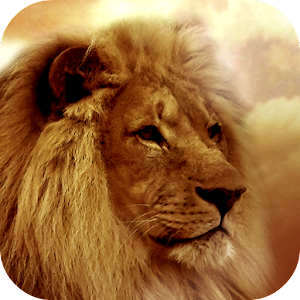 Lion Wallpapers for PC