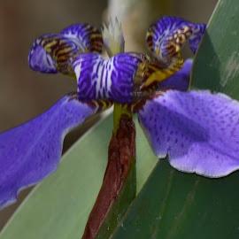 by Fernando Khitri - Flowers Flowers in the Wild