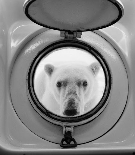 Arctic-Polar-Bear.jpg - An extra-curious polar bear comes right up to a porthole during a Lindblad Expeditions trip to the Arctic.