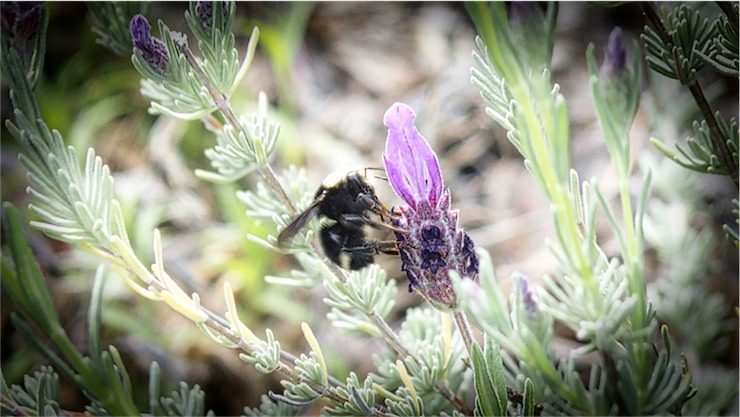 B Bee 5.jpg