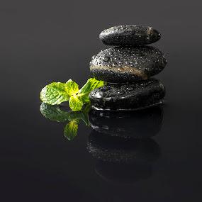 zen rocks by Marianna Armata - Nature Up Close Rock & Stone ( water, studio, drop, green, mint, pebbles, sprig, marianna armata, fresh, droplet, herb, zen, wet, rocks, black )