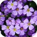 BloomBG: EveryDay Blooms App icon