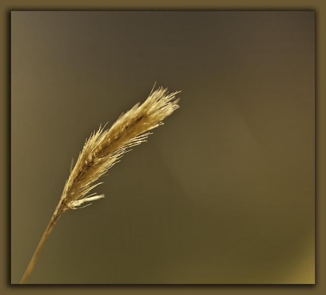 Photo: Gold