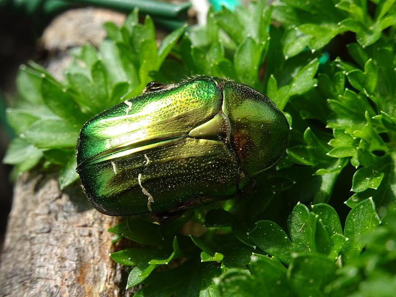 Verde animale/verde vegetale di lenuccia4
