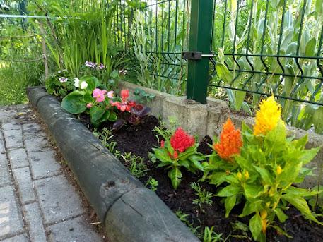 Klub Przyjaciół Natury : Dbamy o przedszkolny ogród