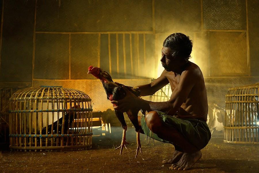 Sang petarung ii [the fighter] by Baldy Patikradja - People Portraits of Men ( cock, digital art, human interest, photography, animal )