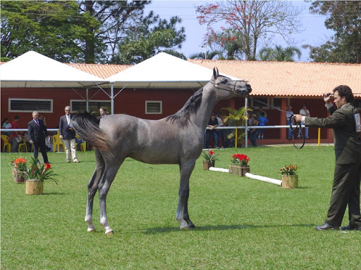 Arabian Horse Wallpapers FREE
