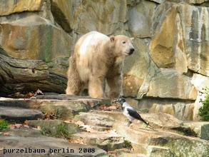 Photo: Knut hat Kraehenbesuch ;-)