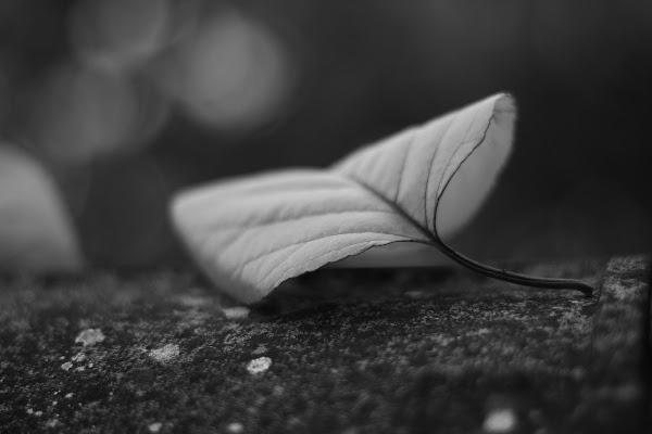 in autunno di rino_savastano