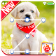 Cute Dogs Labrador Lock screen HD Applock security APK