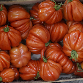 Tomatoes by Debra Graham - Food & Drink Fruits & Vegetables ( box of tomatoes, tomatoes,  )
