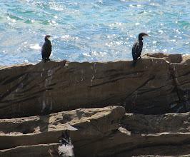 Photo: Year 2 Day 169 - Cormorants on the Rocks