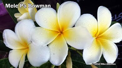 Photo: Mele Pa Bowman - San Diego, CA - East San Diego county