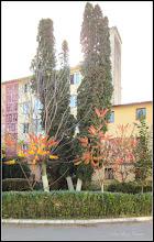Photo: Conifere din Turda, Str. Rapsodiei, Nr.14 - 2018.10.31