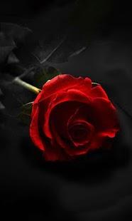 Gothic Rose LWP - náhled