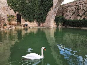 Photo: llac de l'almudaina