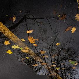 Sidewalk leaves by Adrian Mitu - Nature Up Close Leaves & Grasses ( sidewalk, puddle, reflection, weather, leaf )