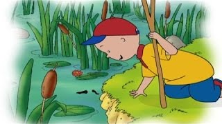 Caillou in the Bayou