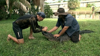 Stormin' Gators