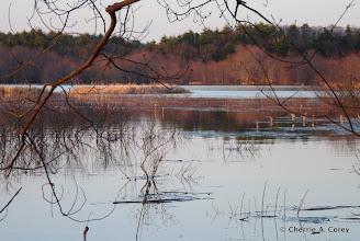 Photo: Flood waters, 4.2.10
