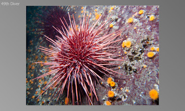 Photo: Red Urchin, Orange cup coral